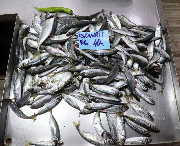 Balık fiyatları neden arttı? Müsilaj etkisi…